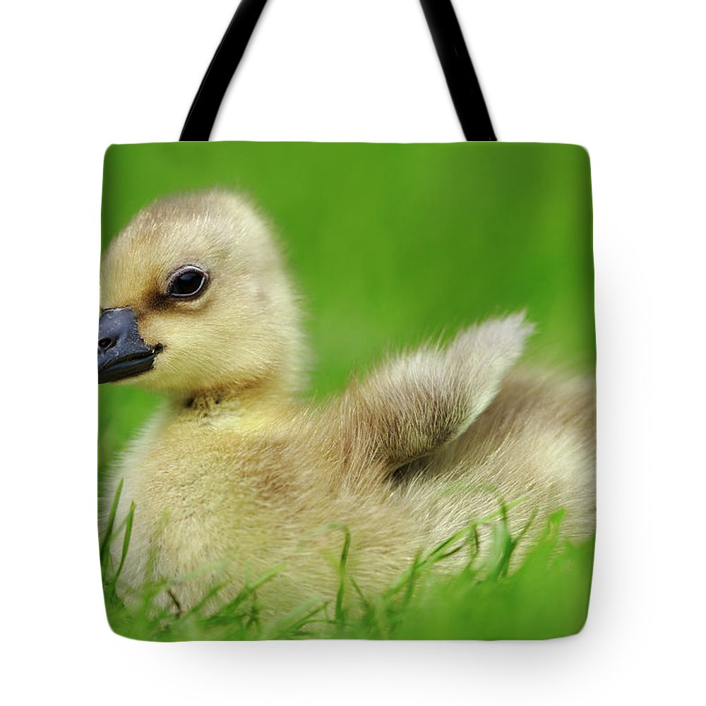 Mp Tote Bag featuring the photograph Greylag Goose Anser Anser Gosling by Cyril Ruoso