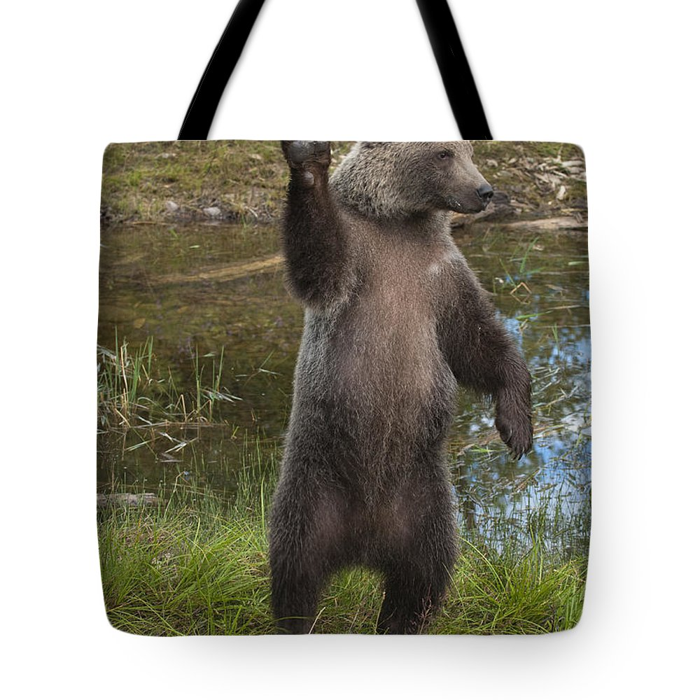 Bronstein Tote Bag featuring the photograph Grizzly Bear Cub by Sandra Bronstein