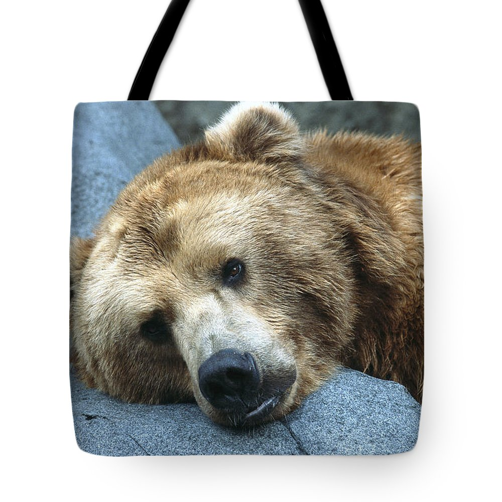 Bear Tote Bag featuring the photograph Grizzly Bear Ursus Arctos Horribilis by San Diego Zoo