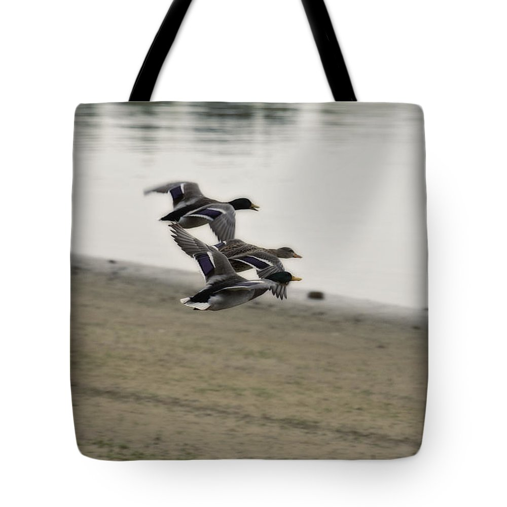 Ducks In Flight Tote Bag featuring the photograph Grouping V2 by Douglas Barnard