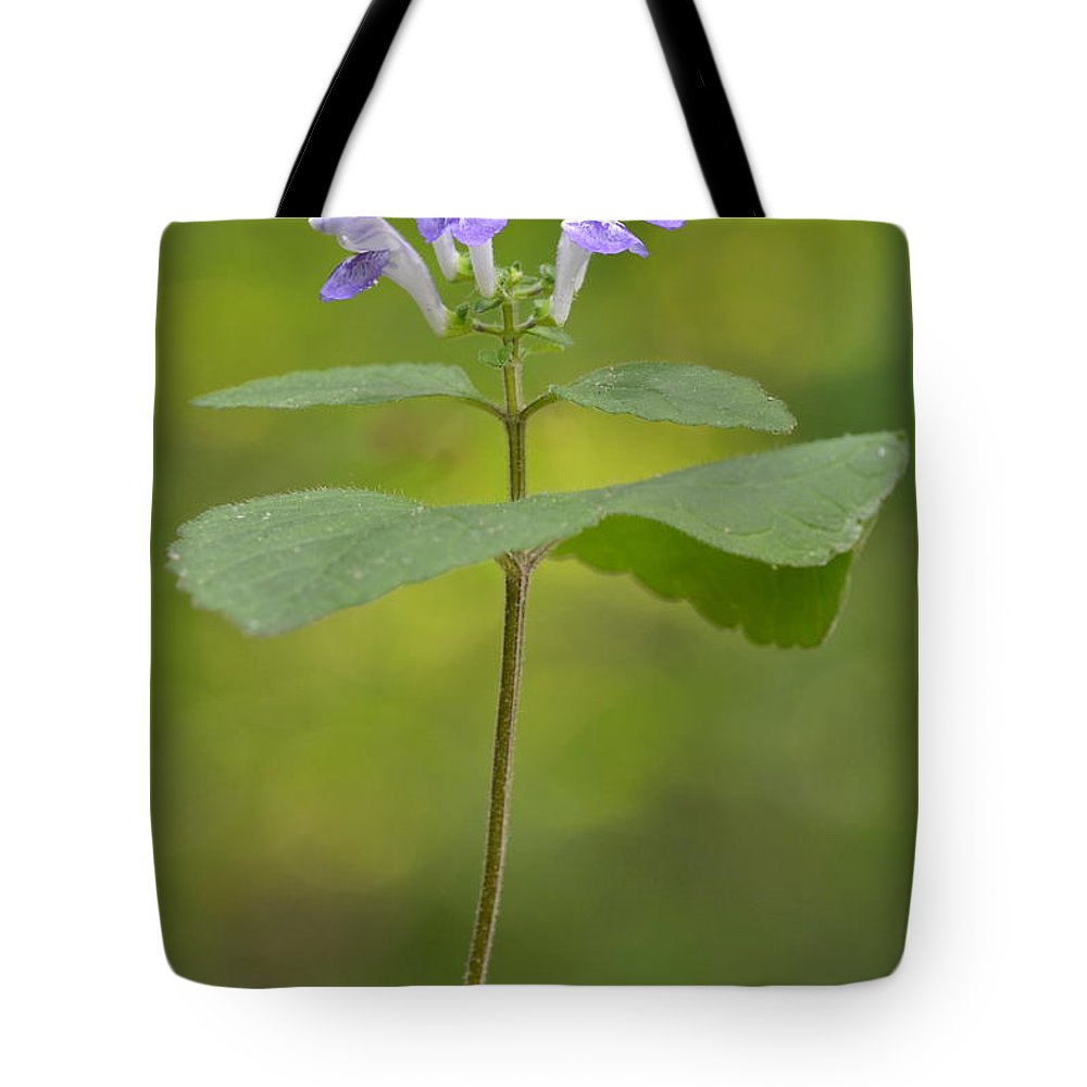 Skullcap Tote Bag featuring the photograph Hairy Skullcap II by JD Grimes