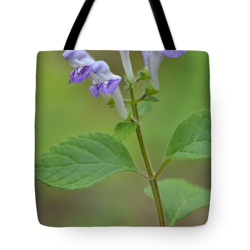 Blue Tote Bag featuring the photograph Hairy Skullcap by JD Grimes