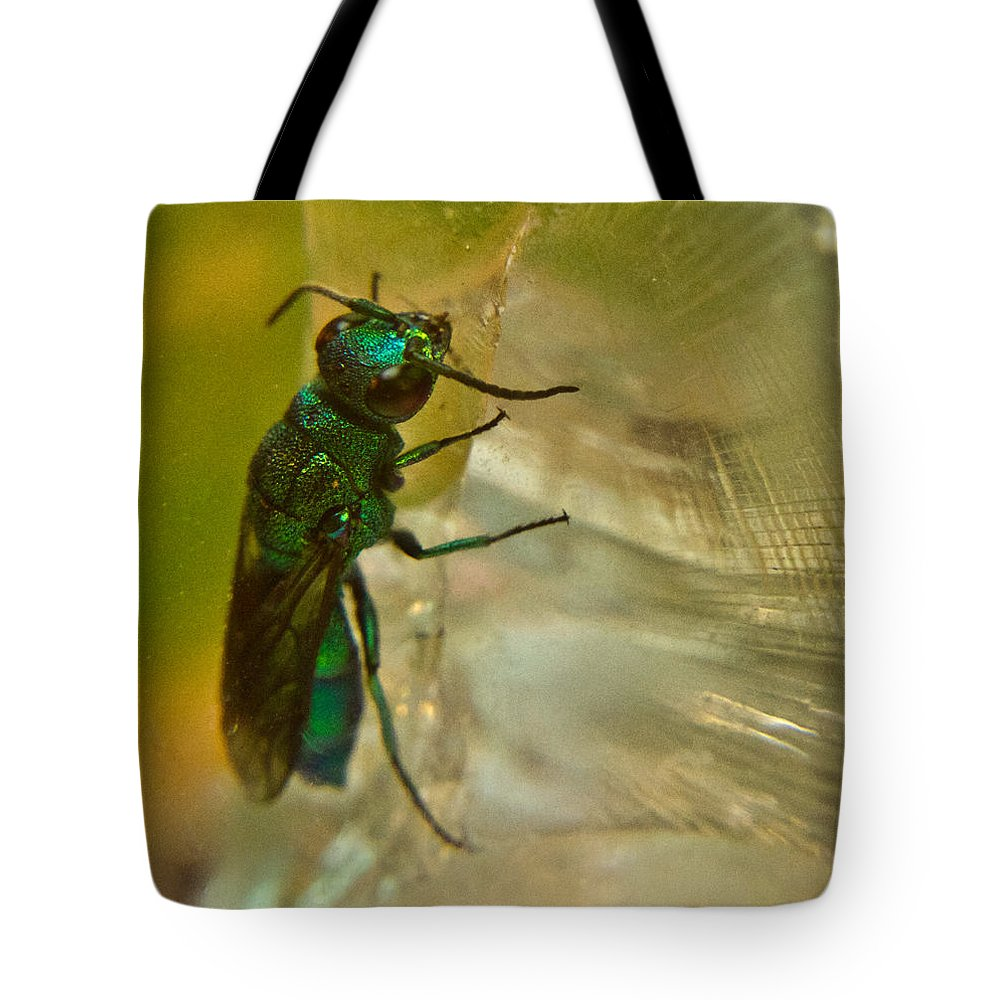 Wasp Tote Bag featuring the photograph Halicid Bee 13 by Douglas Barnett