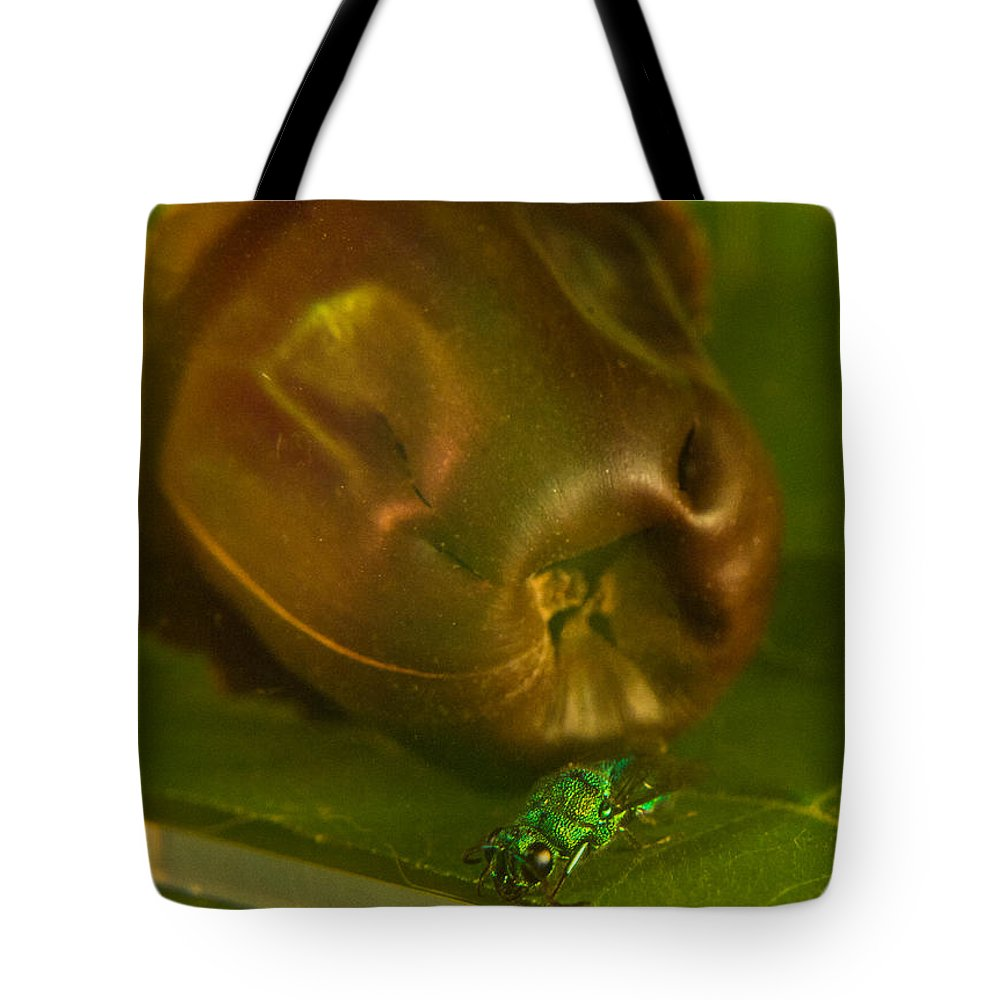 Tote Bag featuring the photograph Halicid Bee 4 by Douglas Barnett