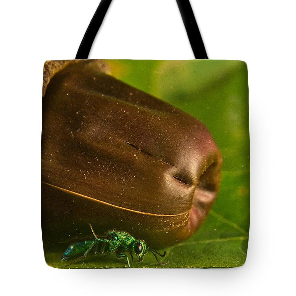Halictid Tote Bag featuring the photograph Halicid Bee 5 by Douglas Barnett