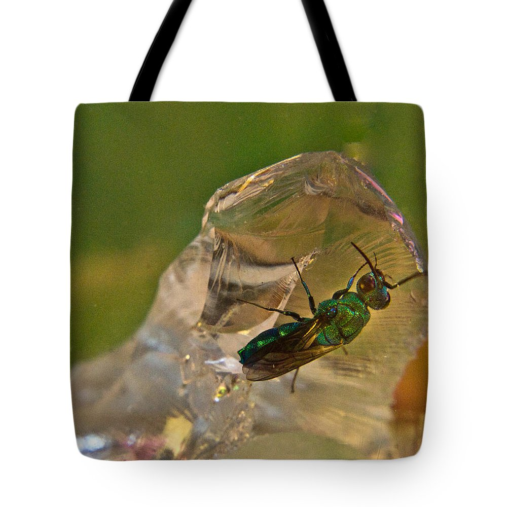 Wasp Tote Bag featuring the photograph Halicid Bee 8 by Douglas Barnett