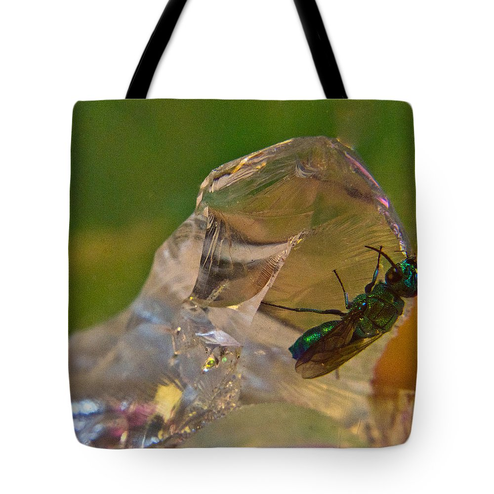 Wasp Tote Bag featuring the photograph Halicid Bee 9 by Douglas Barnett