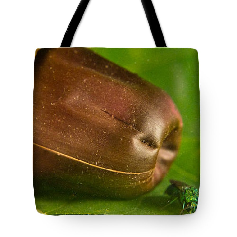 Halictid Tote Bag featuring the photograph Halicid Bee by Douglas Barnett