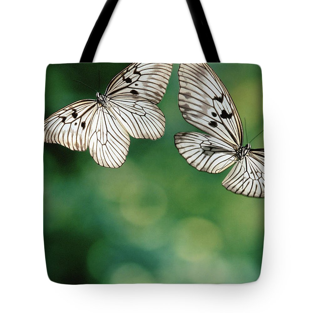 Mp Tote Bag featuring the photograph Handkerchief Butterfly Or Wood Nymph by Michael & Patricia Fogden