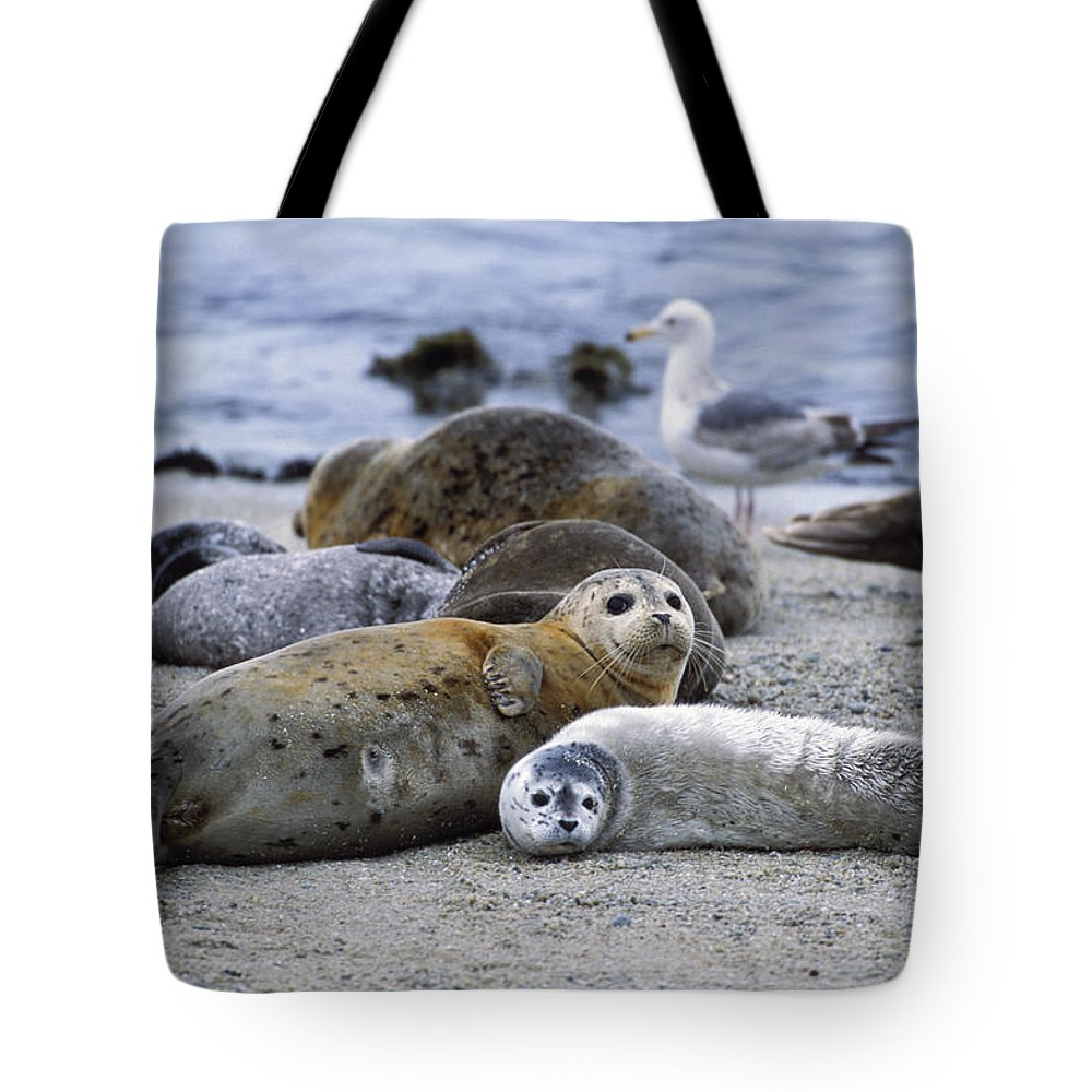Mp Tote Bag featuring the photograph Harbor Seal And Pup by Suzi Eszterhas