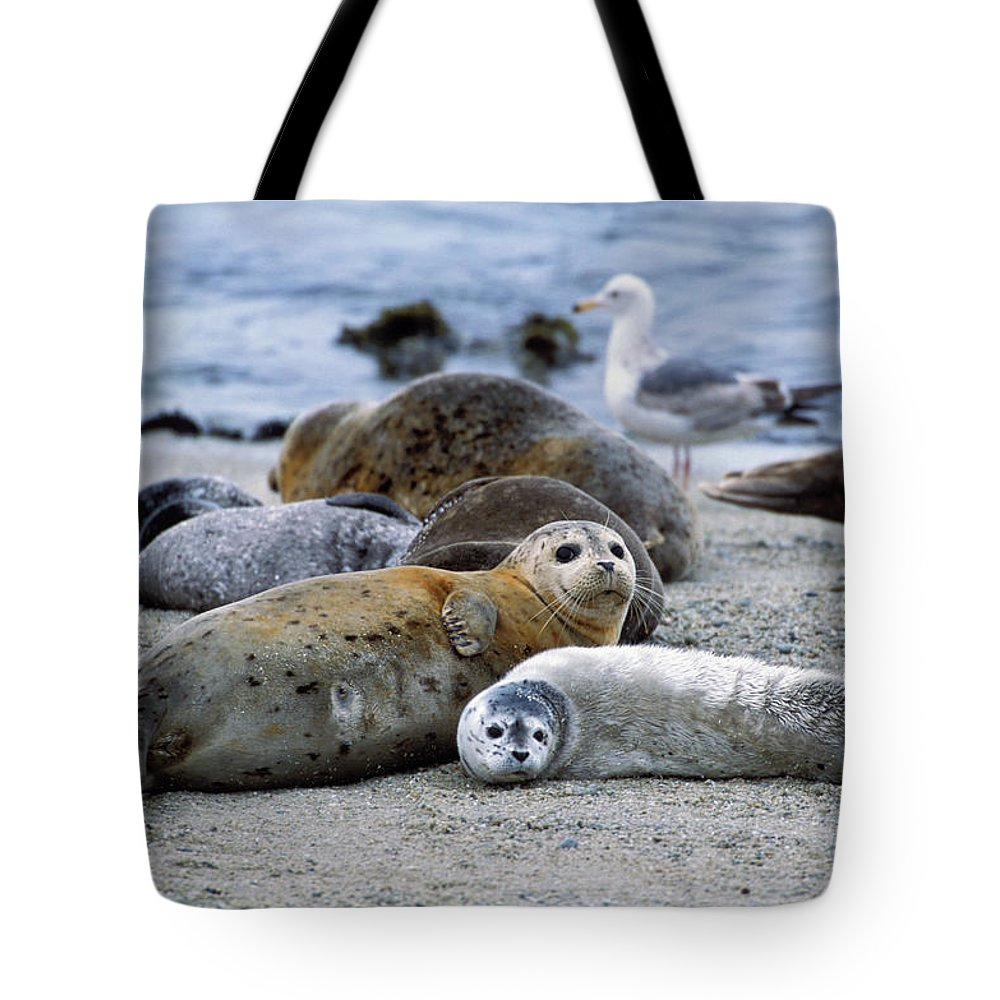 Mp Tote Bag featuring the photograph Harbor Seal Phoca Vitulina Mother by Suzi Eszterhas