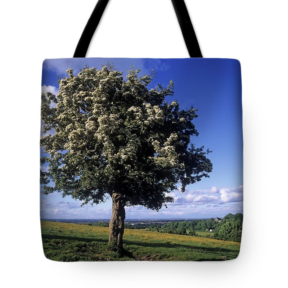 Day Tote Bag featuring the photograph Hawthorn Tree On A Landscape, Ireland by The Irish Image Collection