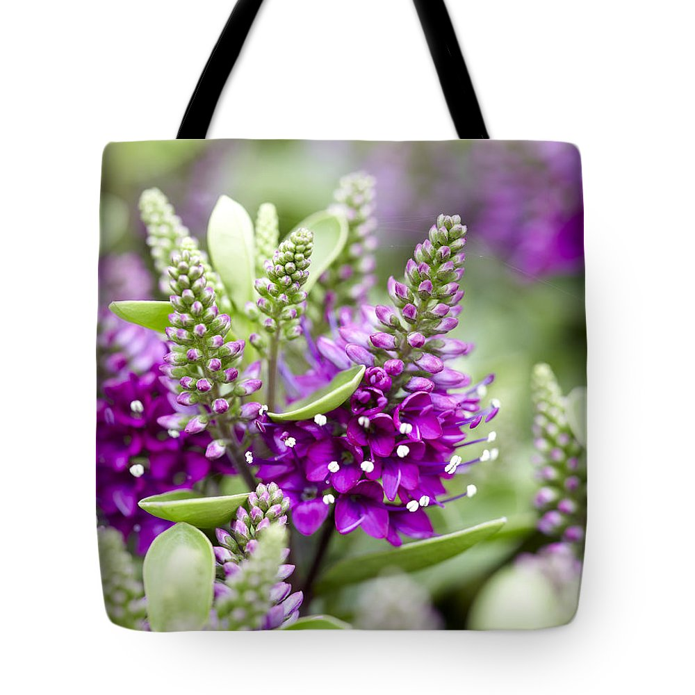 Vp Tote Bag featuring the photograph Hebe Hebe Sp Dona Diana Variety Flowers by VisionsPictures