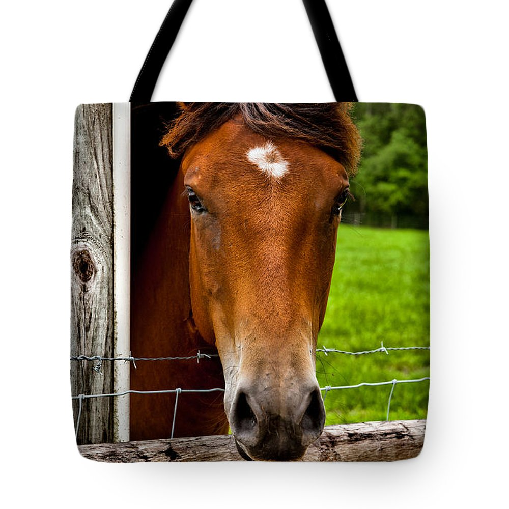 Horse Tote Bag featuring the photograph Hello by Christopher Holmes