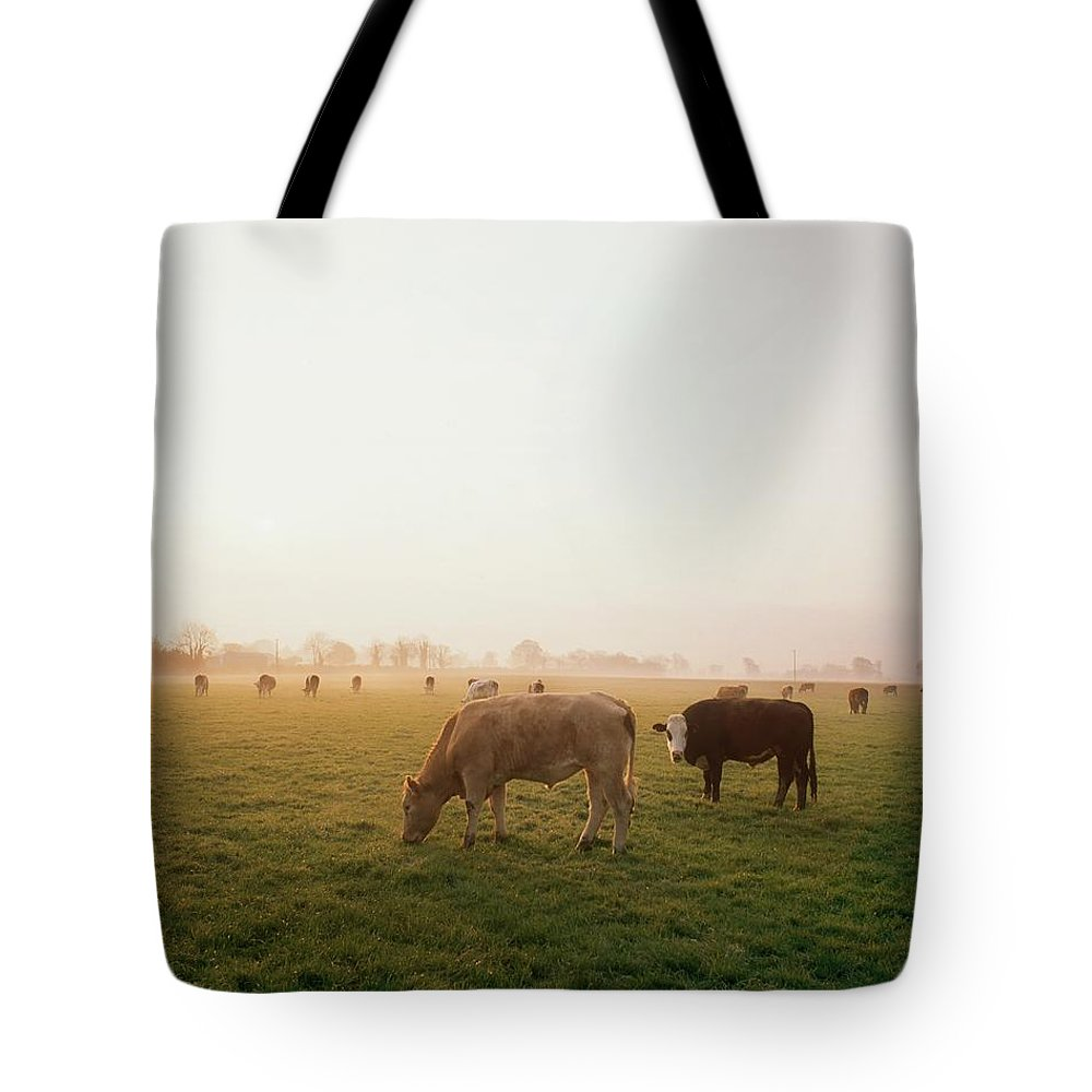 Back Lit Tote Bag featuring the photograph Hereford Cattle, Ireland by The Irish Image Collection