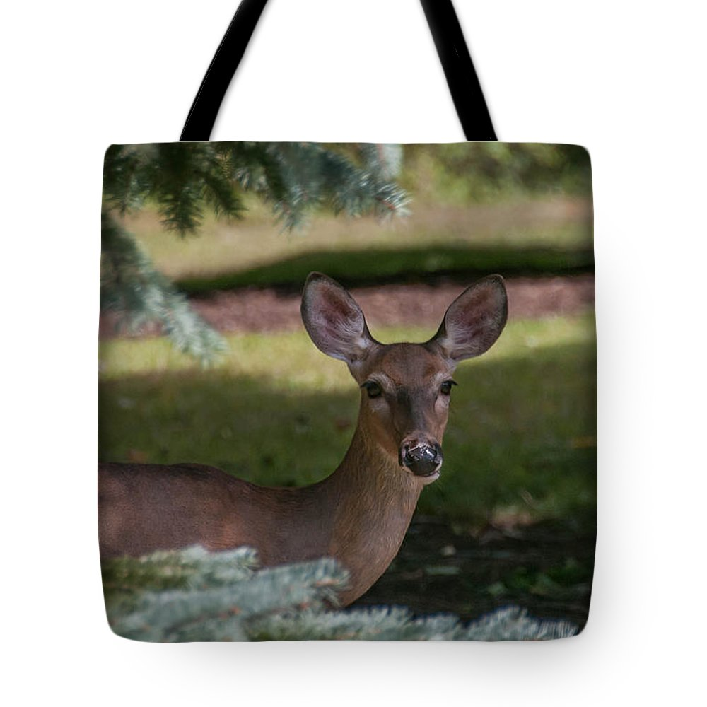 Guy Whiteley Photography Tote Bag featuring the photograph Hi Deer by Guy Whiteley