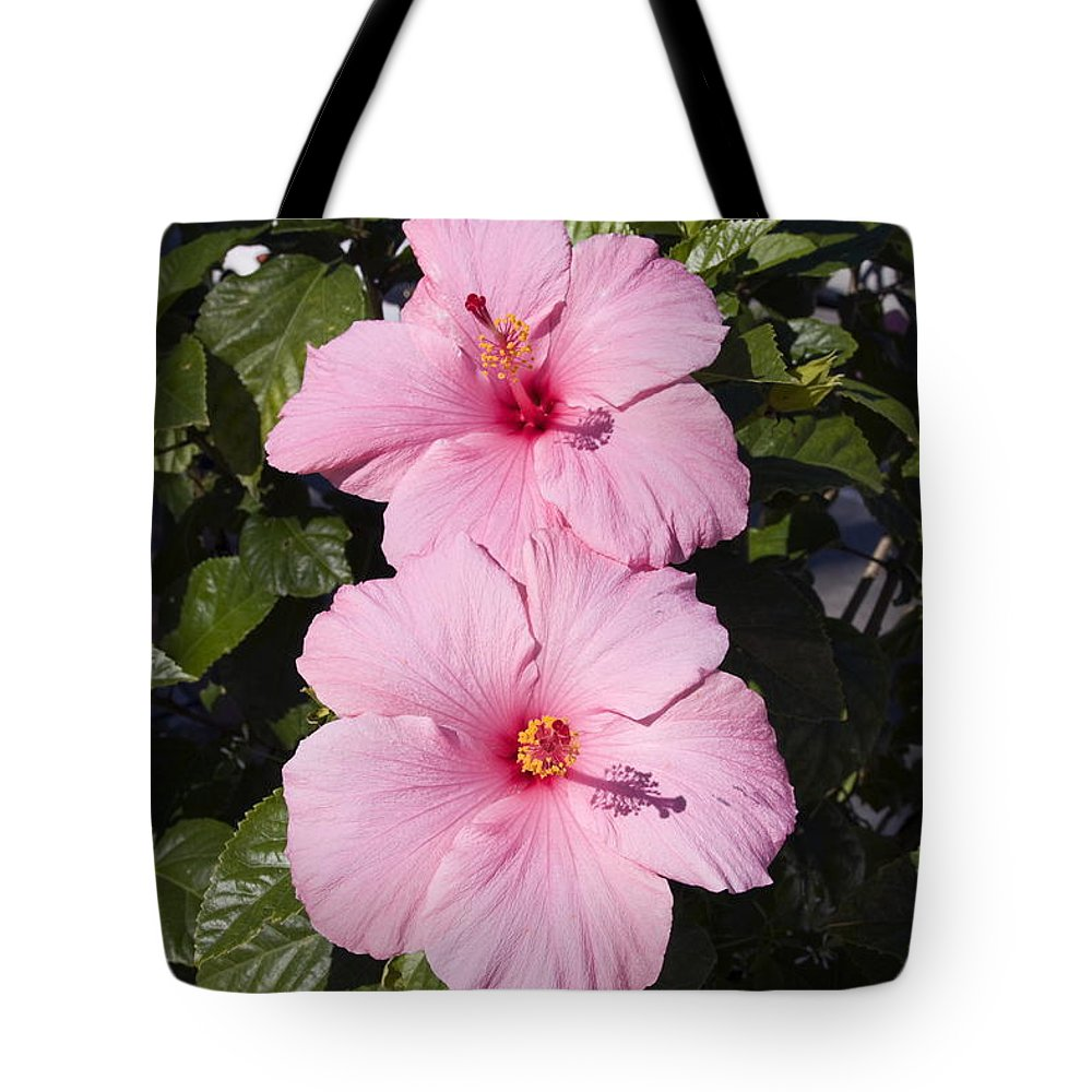 Hibiscus portrait tote bag for sale by sally weigand 2 hibiscus flowers close up tote bag featuring the photograph hibiscus portrait by sally weigand izmirmasajfo