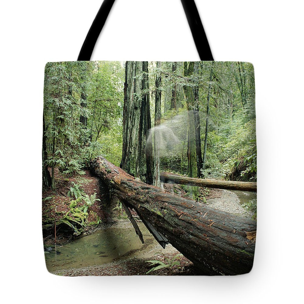 North America Tote Bag featuring the photograph Hiker Moving Over A Fallen Redwood Tree by Rich Reid