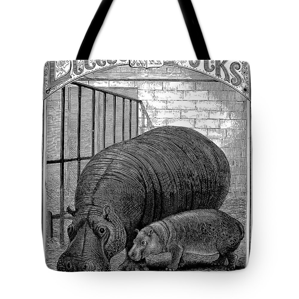 1870s Tote Bag featuring the photograph Hippopotamus by Granger