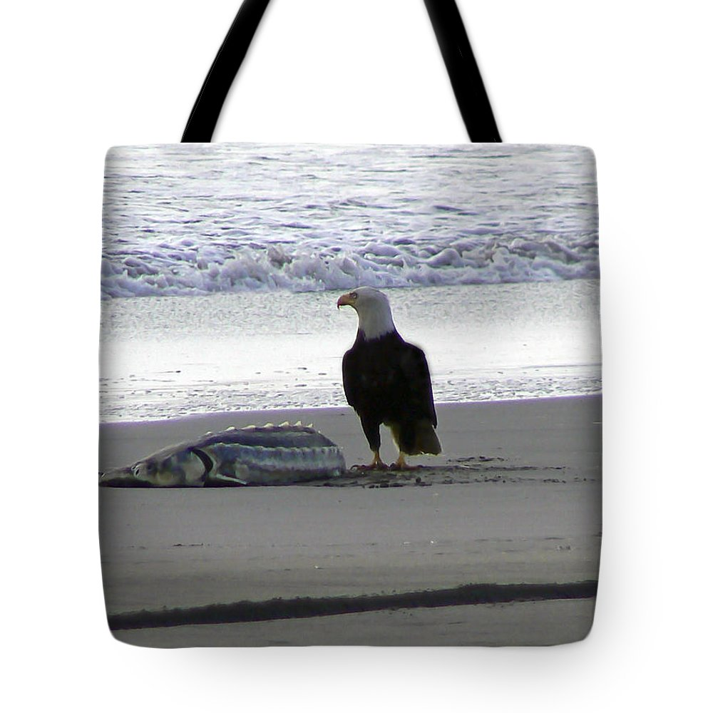Sturgeon Fish Tote Bag featuring the photograph Hmmm Now What by Pamela Patch