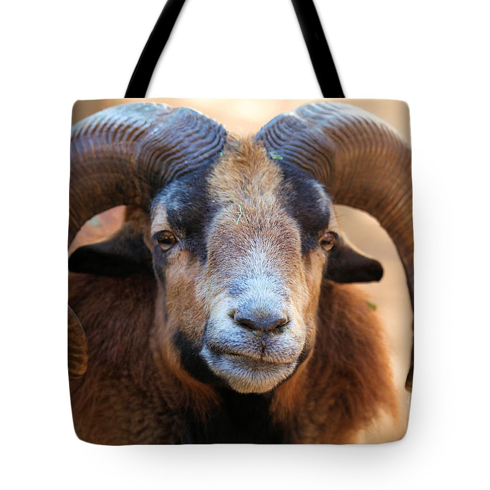 Big Horn Sheep Tote Bag featuring the photograph Ho-hum by Adam Jewell