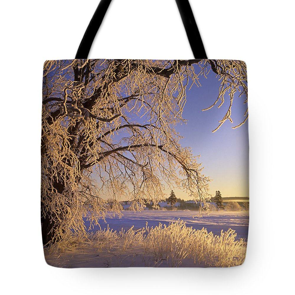 Calming Tote Bag featuring the photograph Hoar Frost On Tree, Milton, Prince by John Sylvester