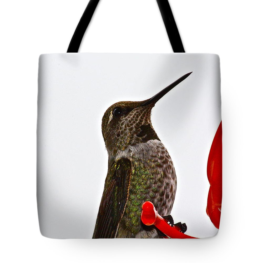 Birds Tote Bag featuring the photograph Hold That Pose by Diana Hatcher