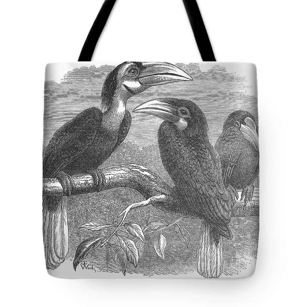 19th Century Tote Bag featuring the photograph Hornbills by Granger