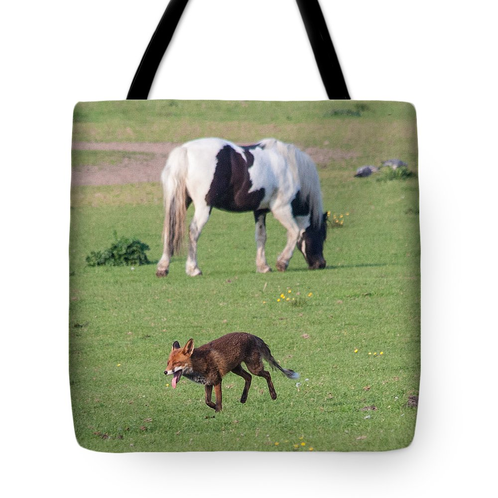 Dawn Oconnor Dawnoconnorphotos@gmail.com Tote Bag featuring the photograph Horse And Fox by Dawn OConnor