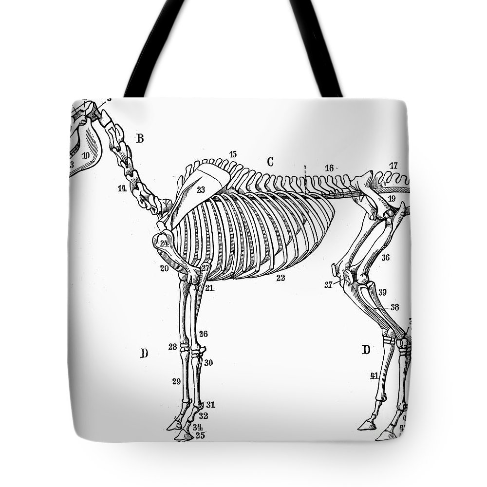 Horse: Bone Structure Tote Bag for Sale by Granger