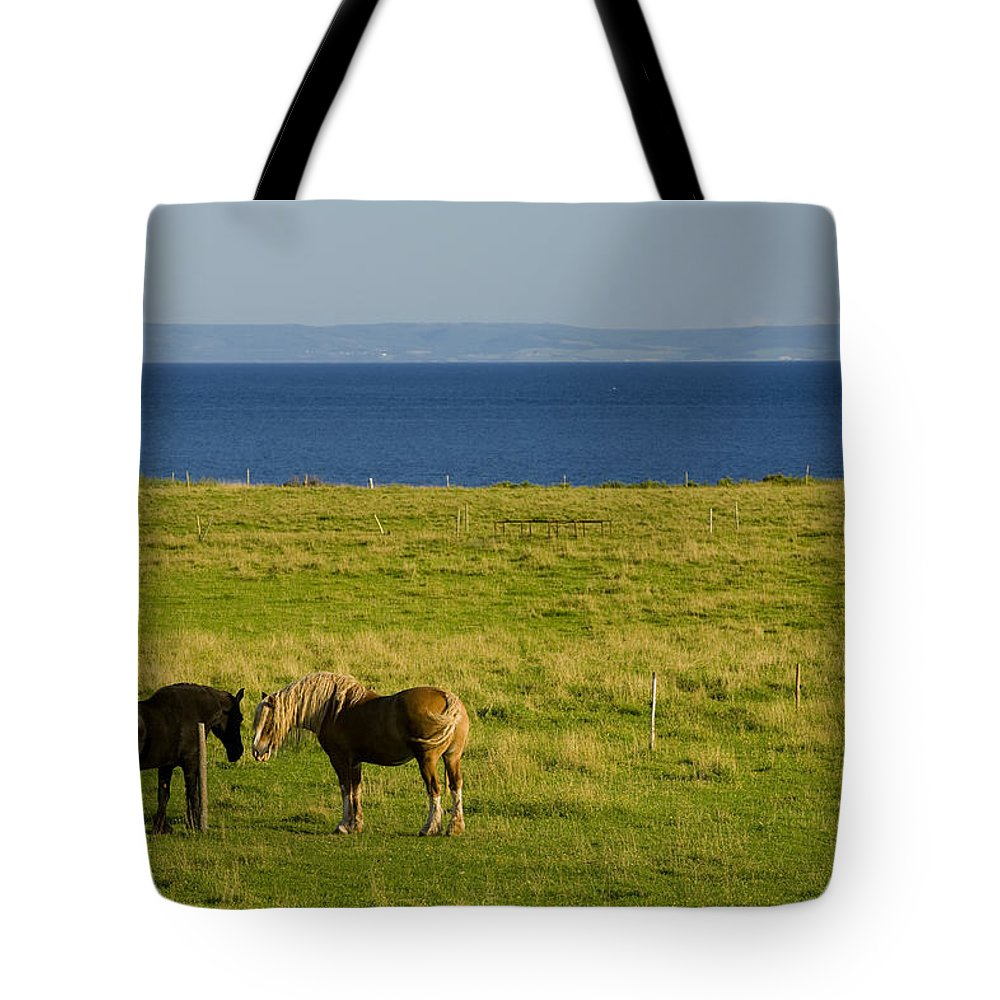 Black Tote Bag featuring the photograph Horses In A Field, Guernsey Cove by John Sylvester