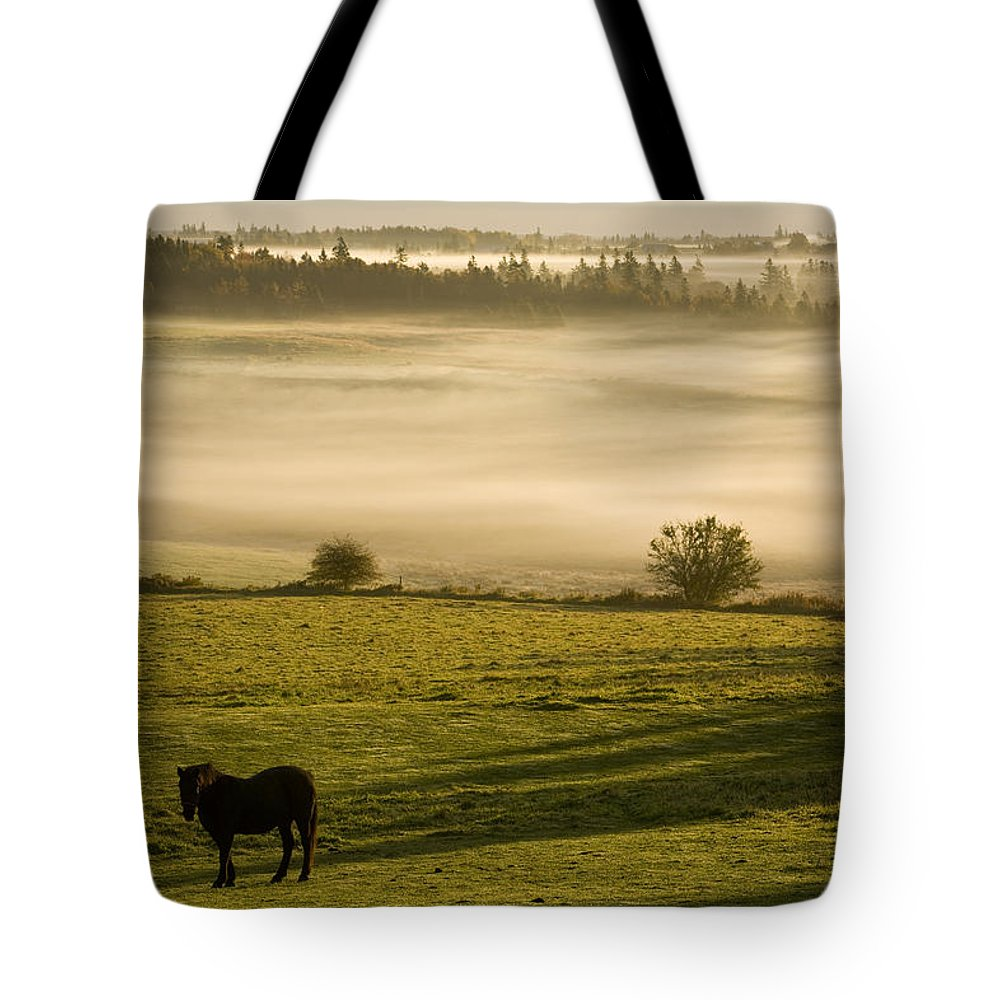 Canadians Tote Bag featuring the photograph Horses In The Morning Mist, North by John Sylvester
