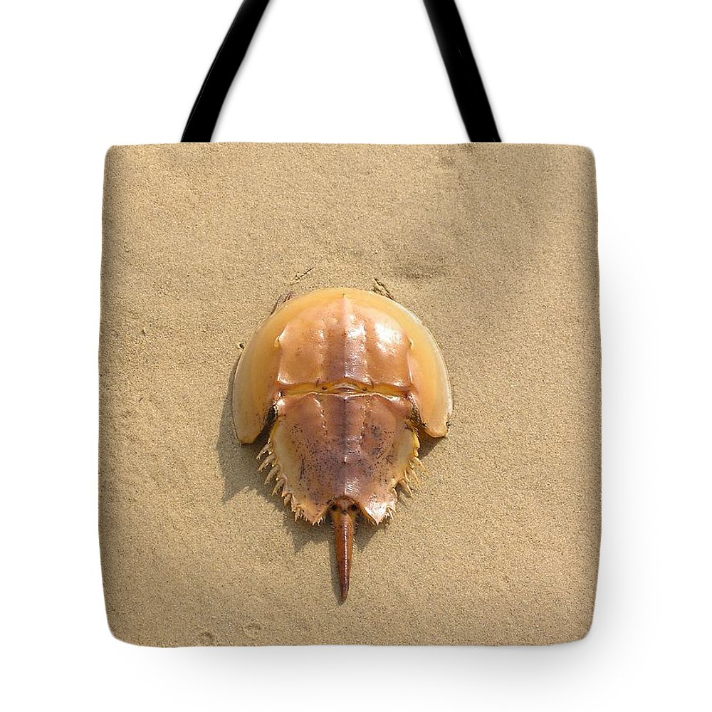 Horseshoe Tote Bag featuring the photograph Horseshoe Crab In The Sand Campground Beach Cape Cod Eastham Ma by Sven Migot