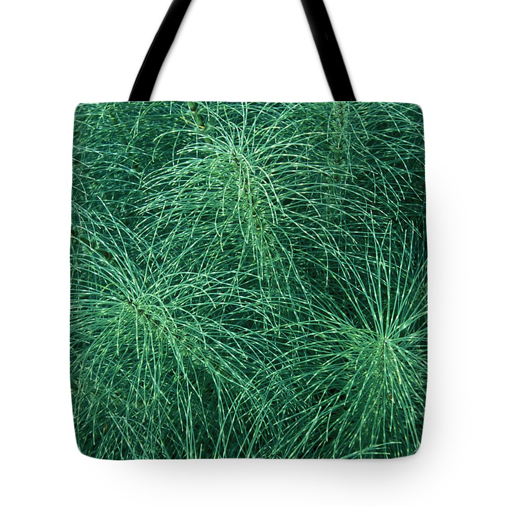 Bronstein Tote Bag featuring the photograph Horsetail Fern by Sandra Bronstein