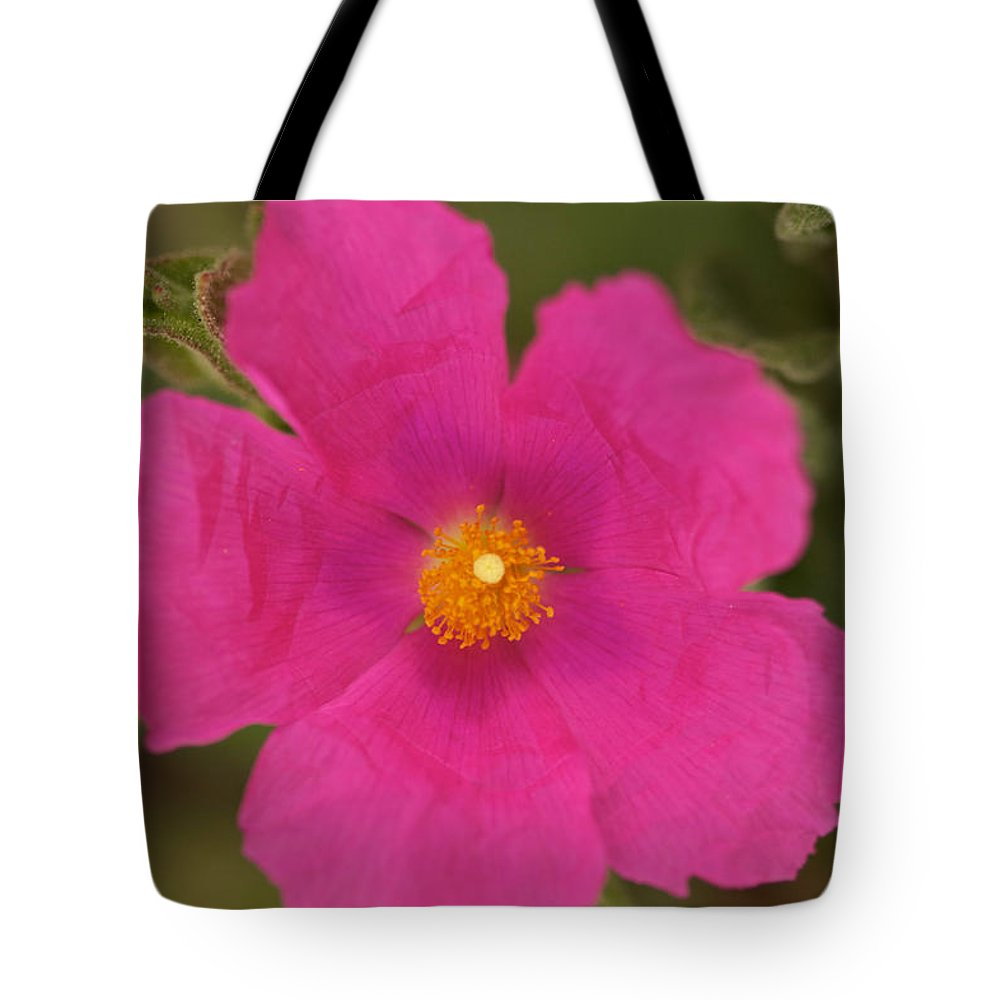 Pink Cosmo Photographs Tote Bag featuring the photograph Hot Pink by Brooke Roby