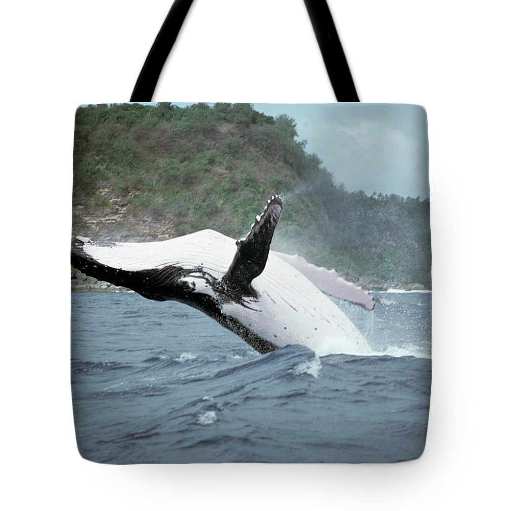 Mp Tote Bag featuring the photograph Humpback Whale Megaptera Novaeangliae by Mike Parry