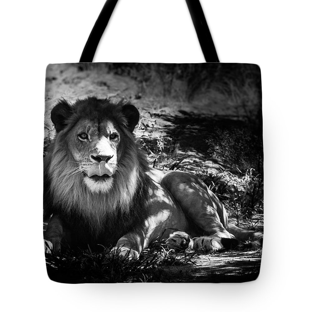 Lion Tote Bag featuring the photograph Hungry Lion by Hakon Soreide