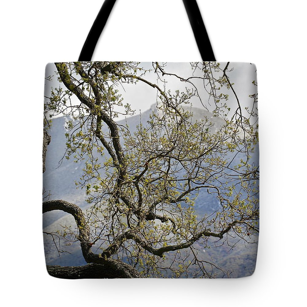 Snow Tote Bag featuring the photograph Hunting For Snow by Diana Hatcher