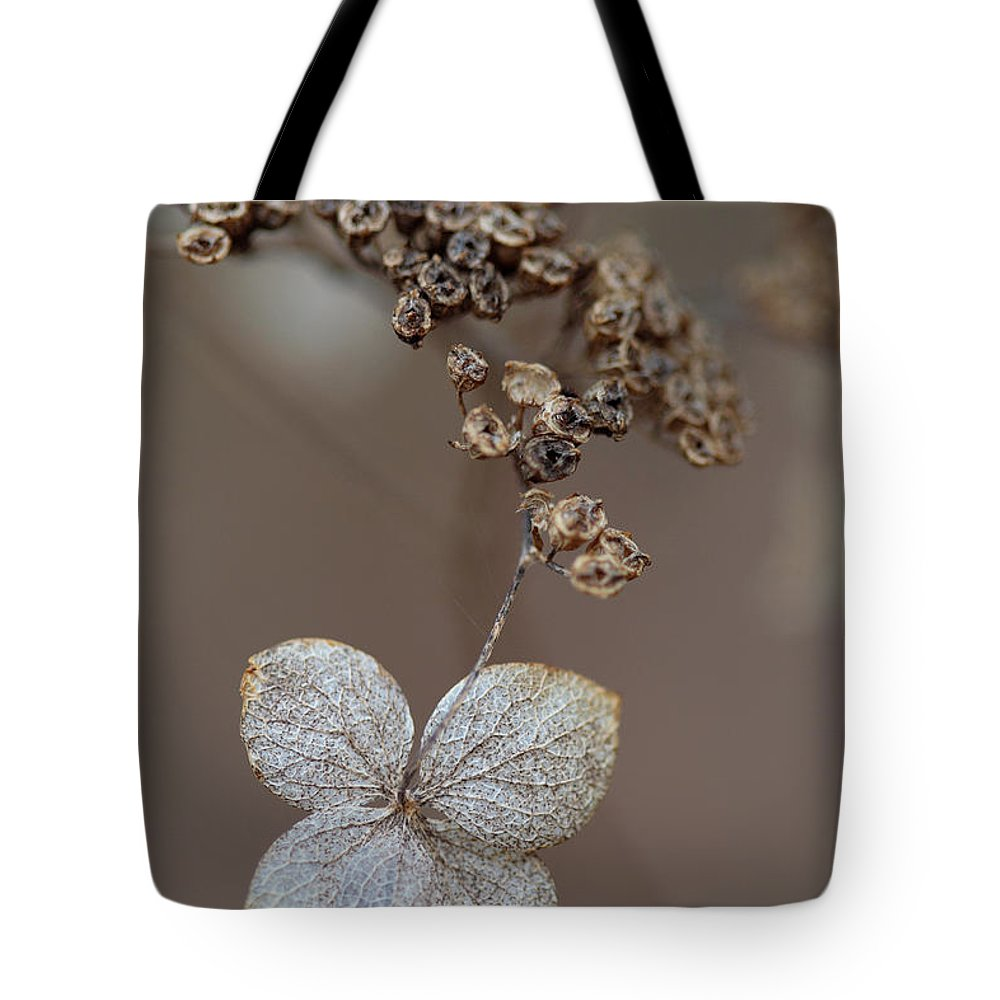 Plant Tote Bag featuring the photograph Hydrangea Arborescens Dry Flower Head In Winter by Daniel Reed
