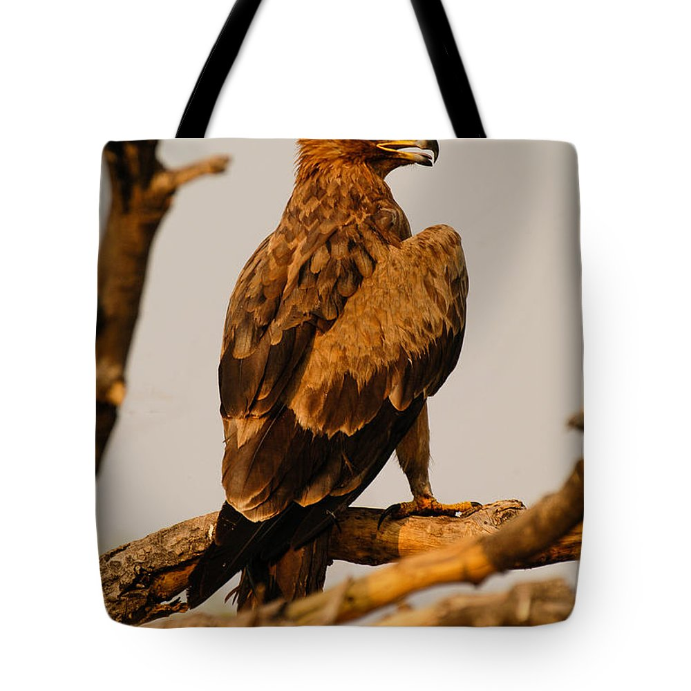 Africa Tote Bag featuring the photograph I Am Predator by Alistair Lyne