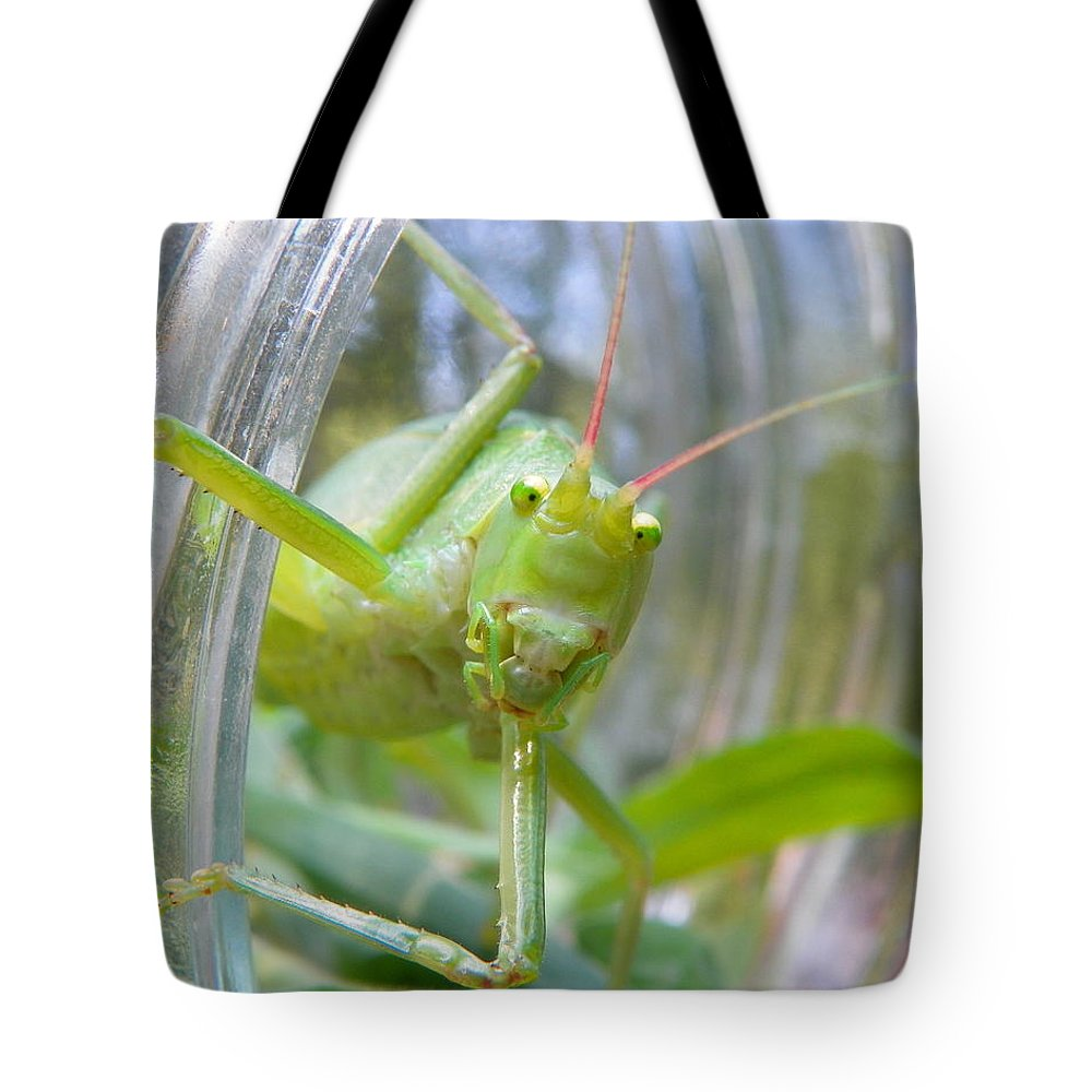 Katydid Tote Bag featuring the photograph I See You by Chad and Stacey Hall
