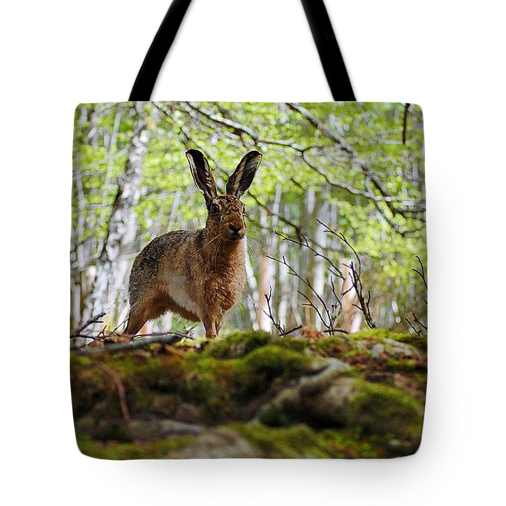 Brown Hare Tote Bag featuring the photograph I'm All Ears by Gavin Macrae