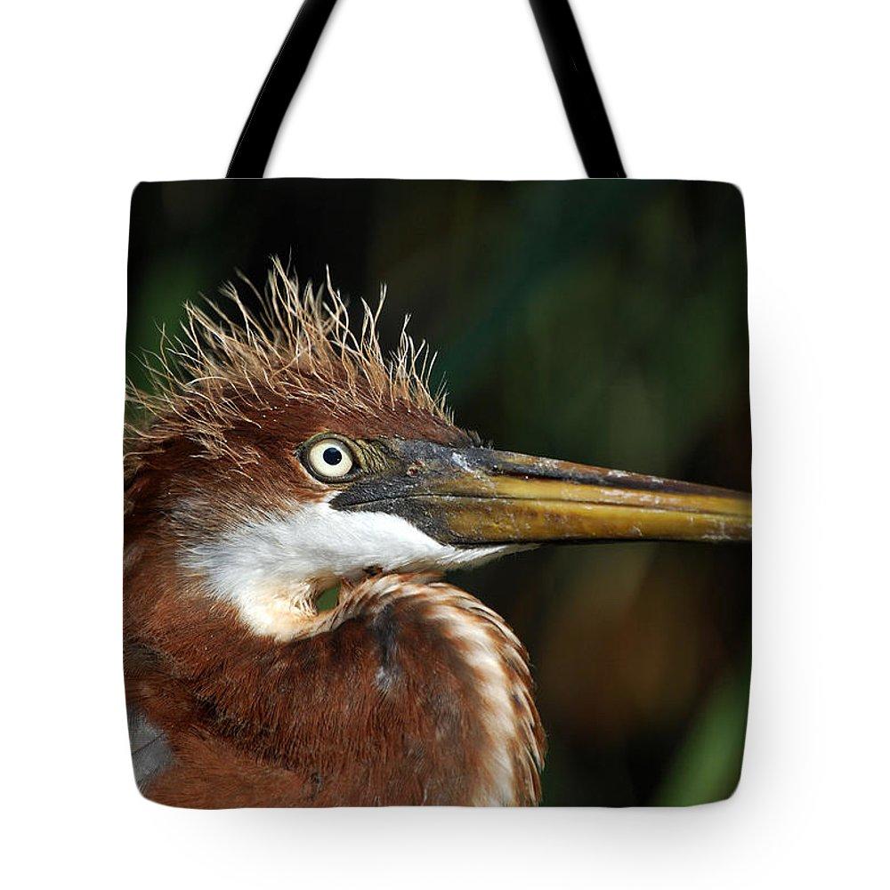Louisiana Heron Tote Bag featuring the photograph Immature Louisiana Hair Day by Skip Willits