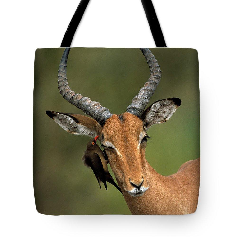 Impala Tote Bag featuring the photograph Impala Aepyceros Melampus Buck Africa by Rob Reijnen