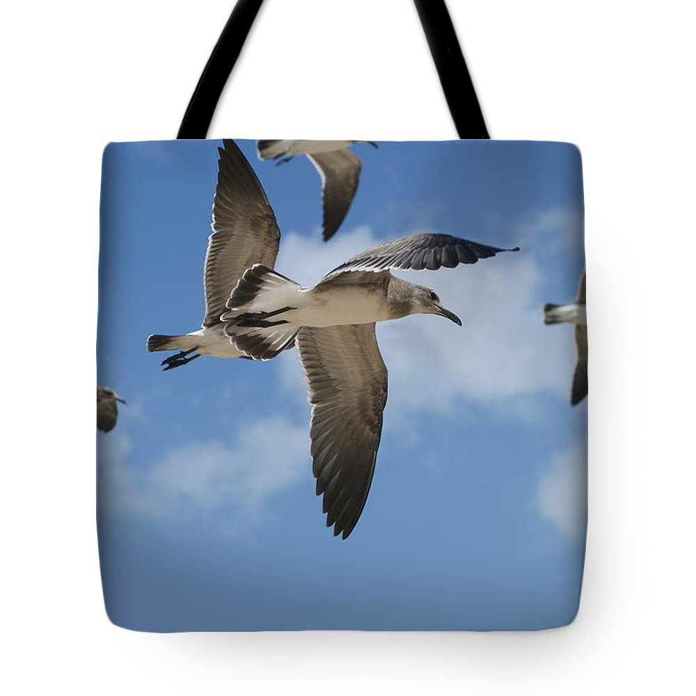 Sea Gull Tote Bag featuring the photograph In Flight by Heidi Poulin