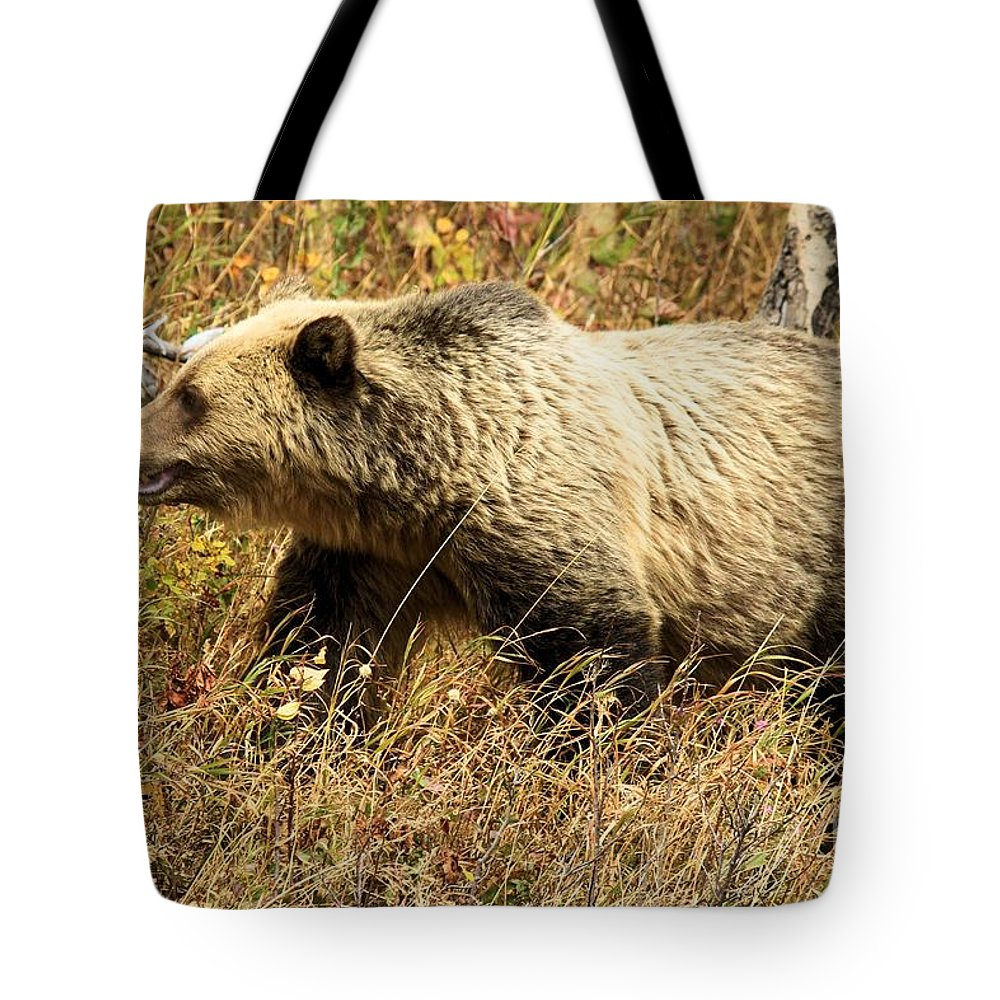 Grizzly Bear Tote Bag featuring the photograph In Stride by Adam Jewell