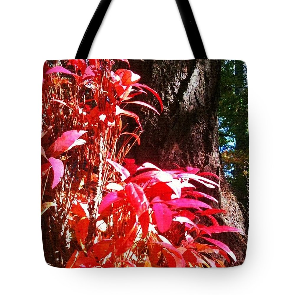 Autumn Tote Bag featuring the photograph In The Shelter Of Your Arms by Anna Porter