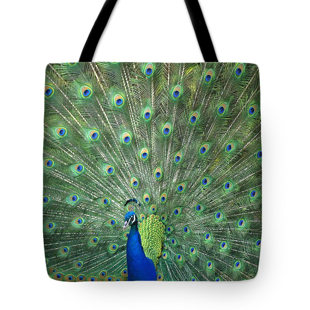 Captive Tote Bag featuring the photograph Indian Peafowl Pavo Cristatus Male by San Diego Zoo