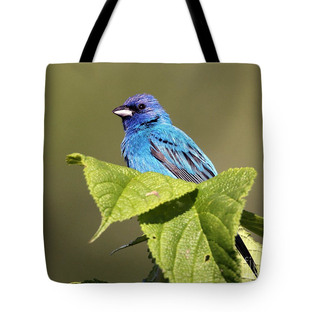 Tote Bag featuring the photograph Indigo Bunting by Douglas Stucky