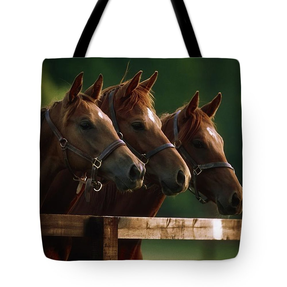 Day Tote Bag featuring the photograph Ireland Thoroughbred Horses by The Irish Image Collection